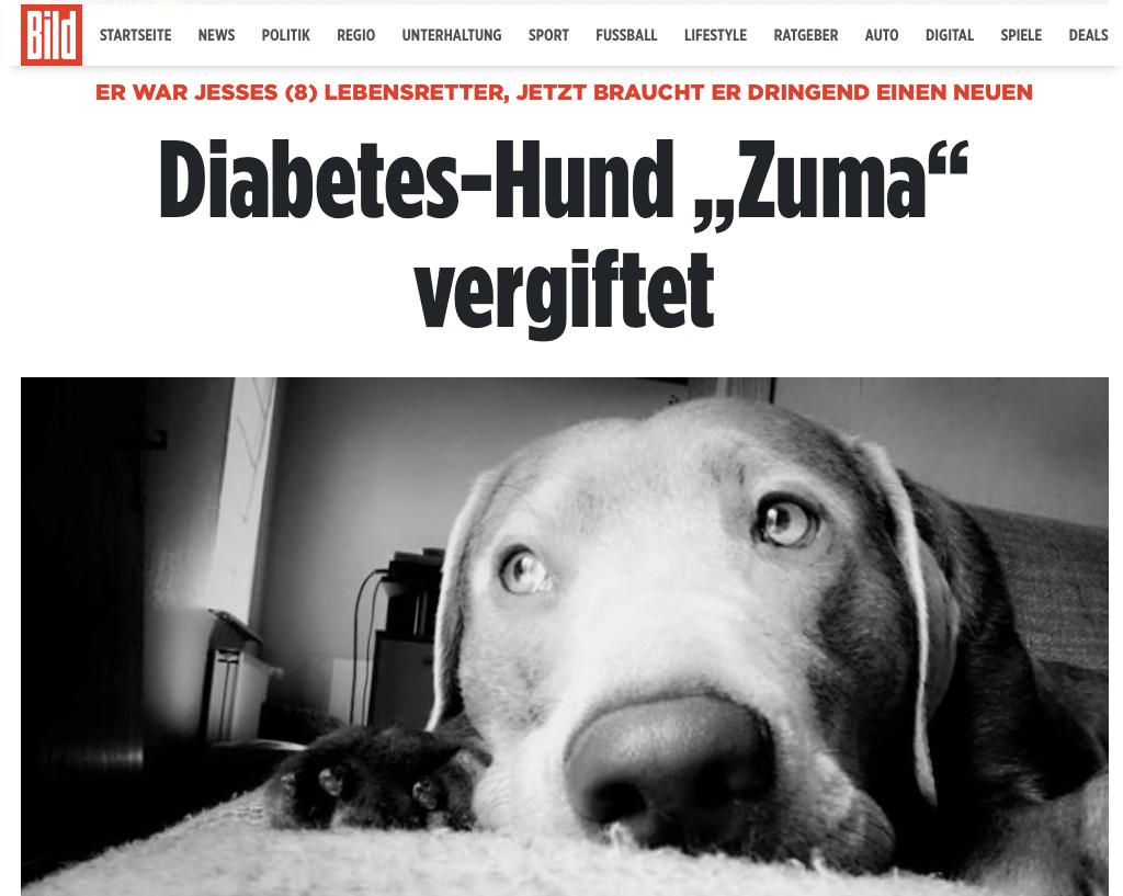 Aktion Kindertraum Blog Jesse Zuma BILD - Jesses Diabetes-Warnhund vergiftet